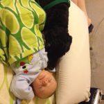 Relación entre la mascota y los bebés.